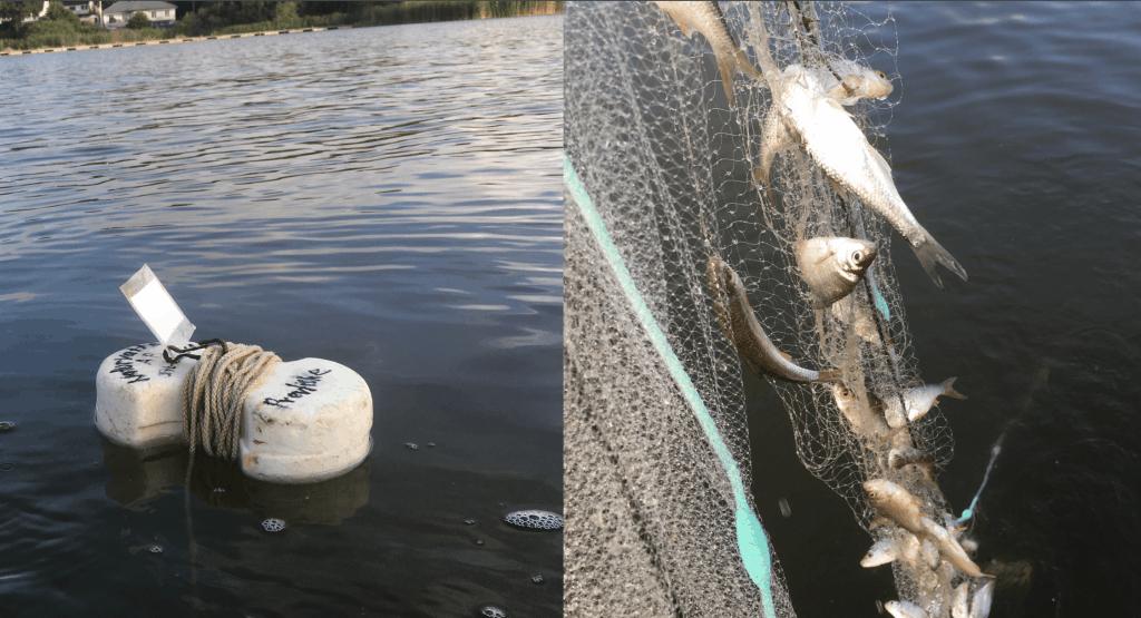Standardiserat provfiske i Trehörningen 2020