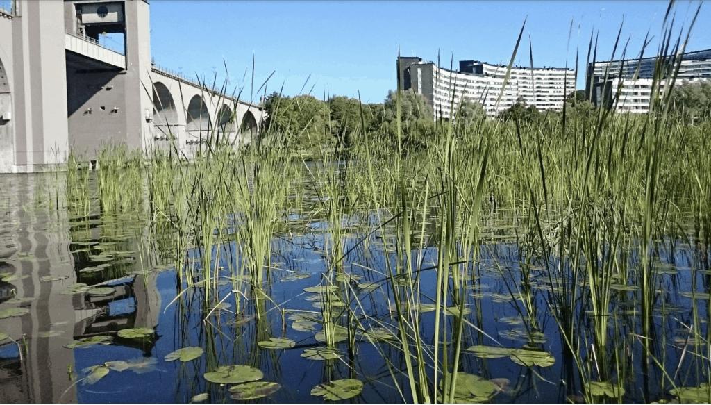 Vattenvegetation i Stockholms stad 2014