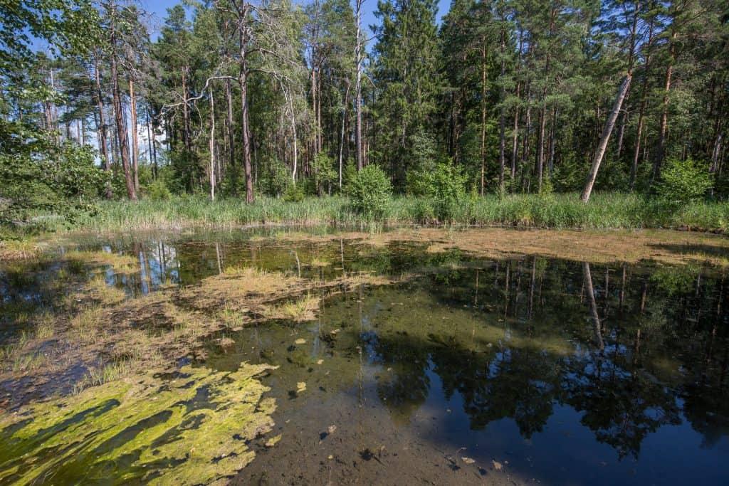 Nacka kommun lämnar nu Tyresåns vattenvårdsförbund.