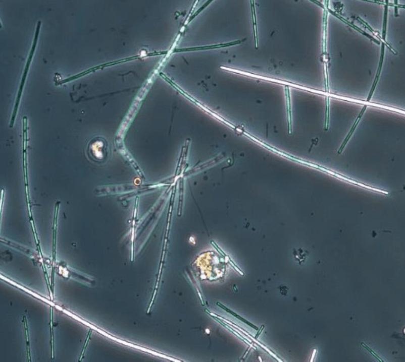 Växt- och djurplankton 2019