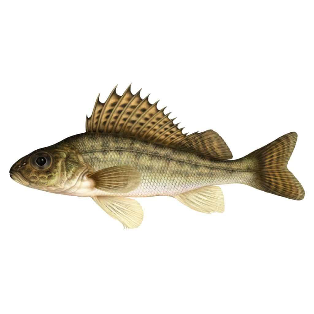 Standardiserat nätprovfiske i Gömmaren 2017