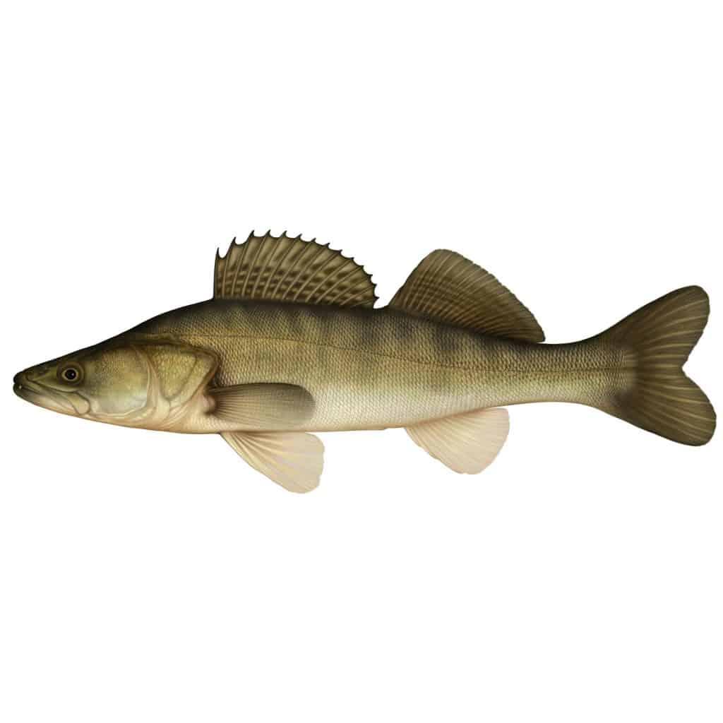 Standardiserat nätprovfiske i Orlången 2015