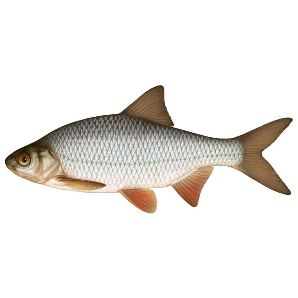Standardiserat provfiske i Magelungen 2014