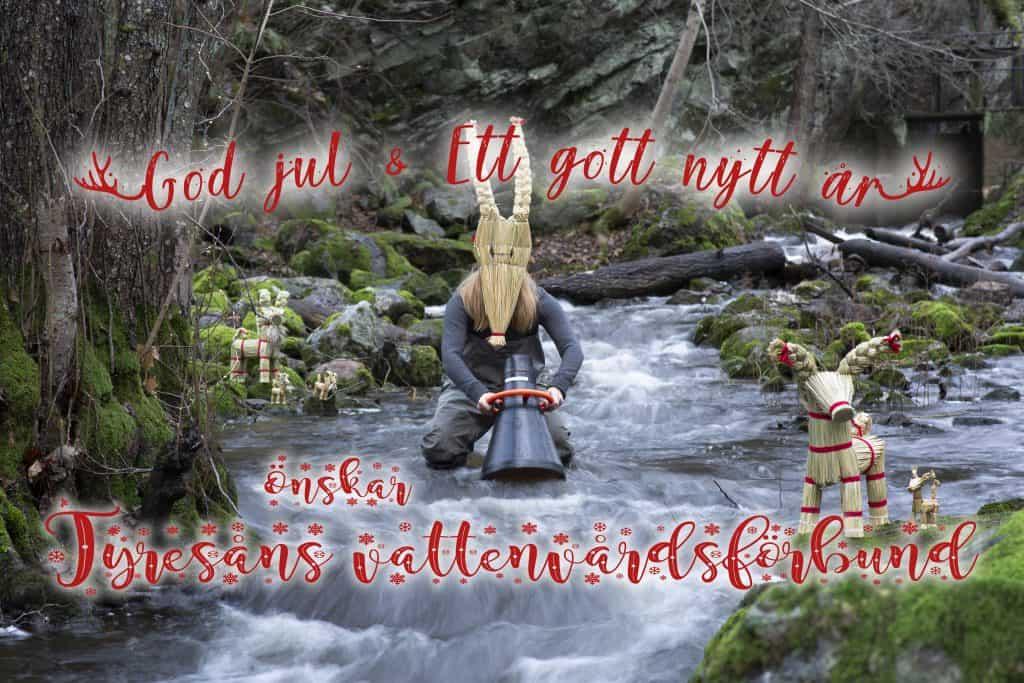 Sällsynt julbock påträffad i Tyresåns vattendrag! featured image.