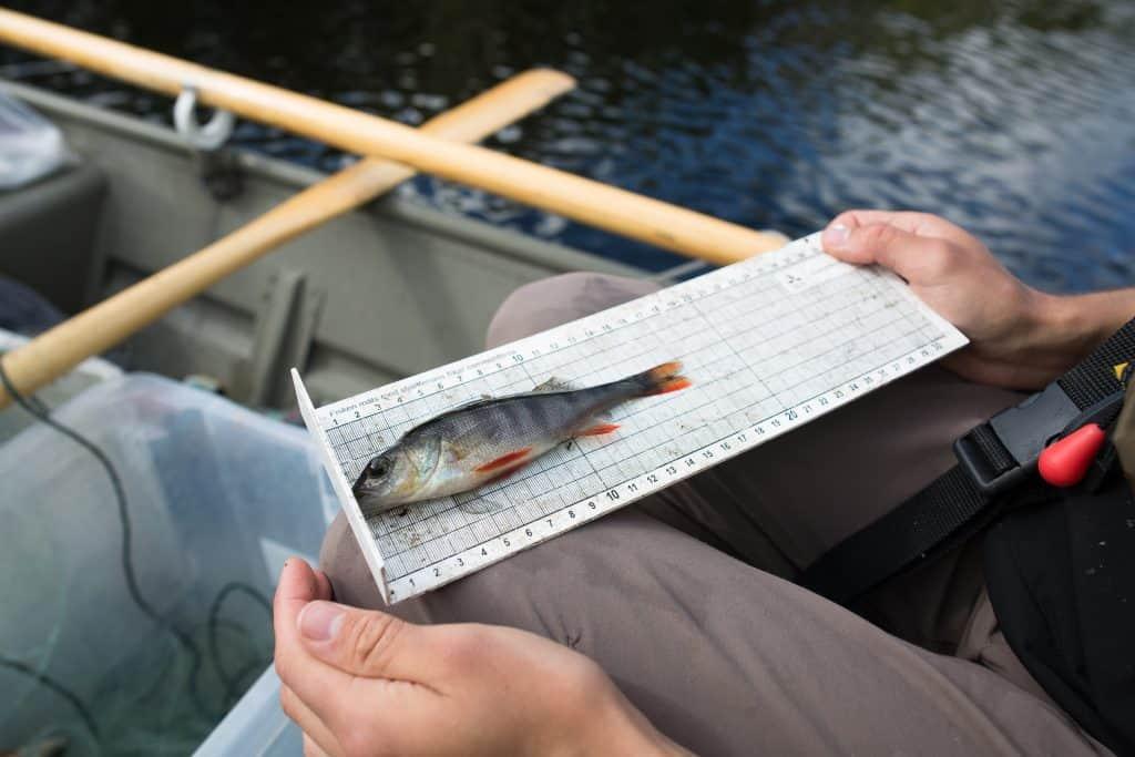 Miljögifter i fisk i Tyresån 2019