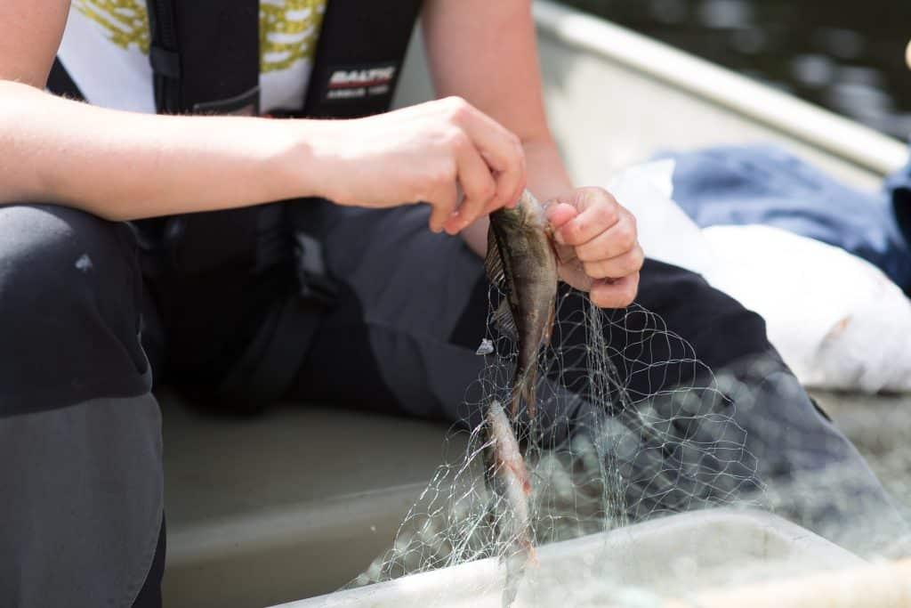 Ny undersökning Miljögifter i fisk i Tyresån